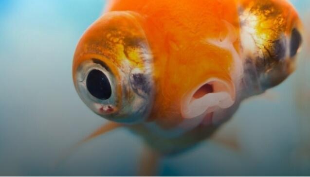 Медики назвали самую опасную для здоровья рыбу