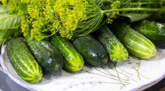 Рецепты малосольных огурцов быстрого приготовления