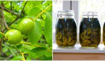 Исцеляющий бальзам Герасимова на зеленых орехах